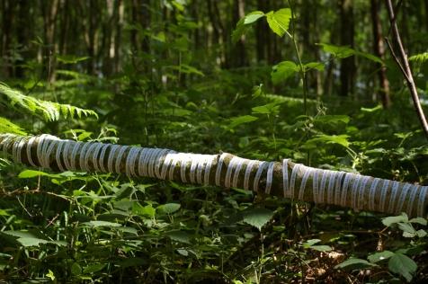 Papertrails, 2007