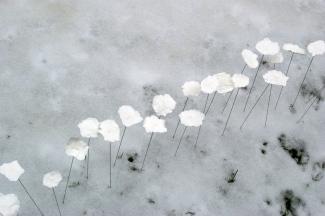 Snowline, 2007, Jane Ponsford